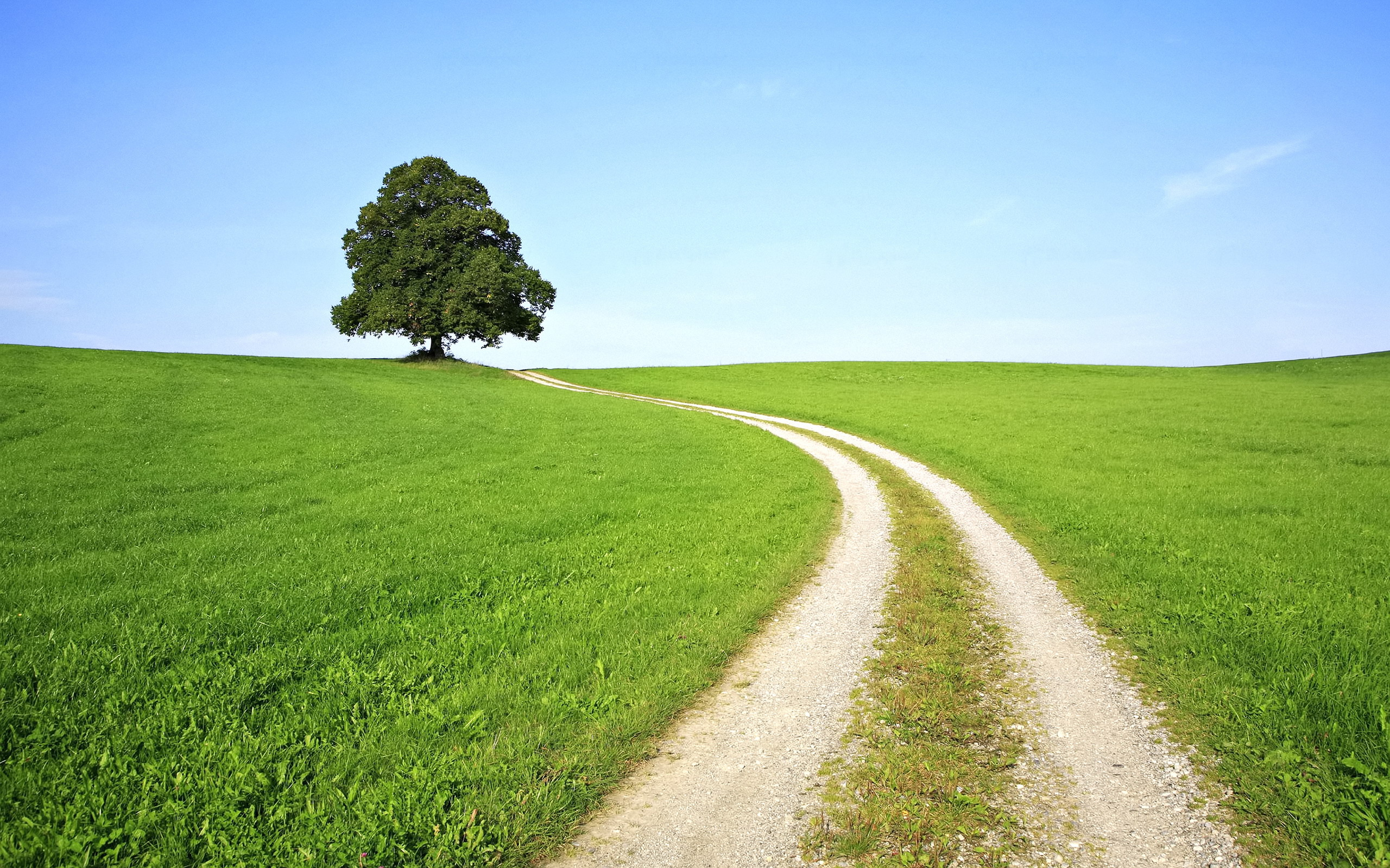 Дорога через зеленое поле  № 2604462 без смс